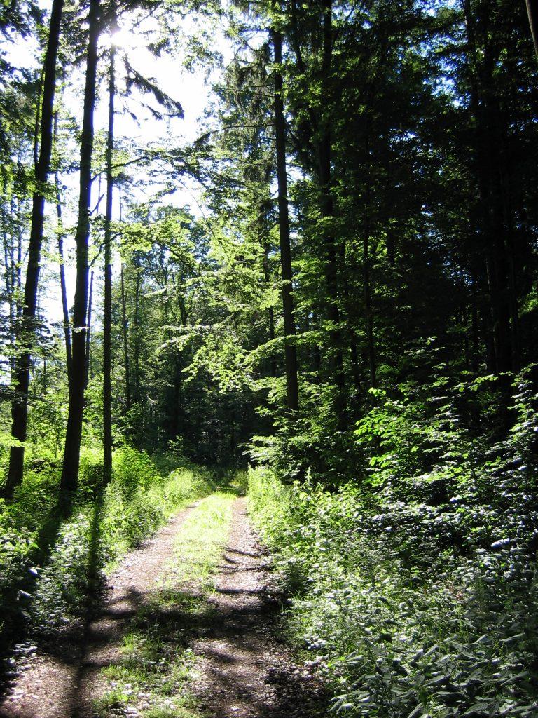 Bild Wald